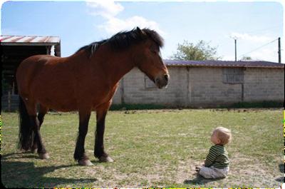 bébés cavaliers