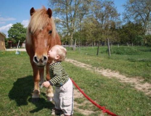 Séances Bébés cavaliers